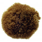 Natural Grass Sea Sponge