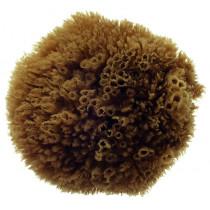 Natural Grass Sea Sponge